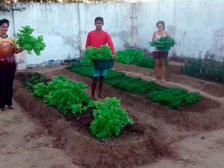 Programa Cisternas nas Escolas gera frutos em comunidade de Serra Caiada