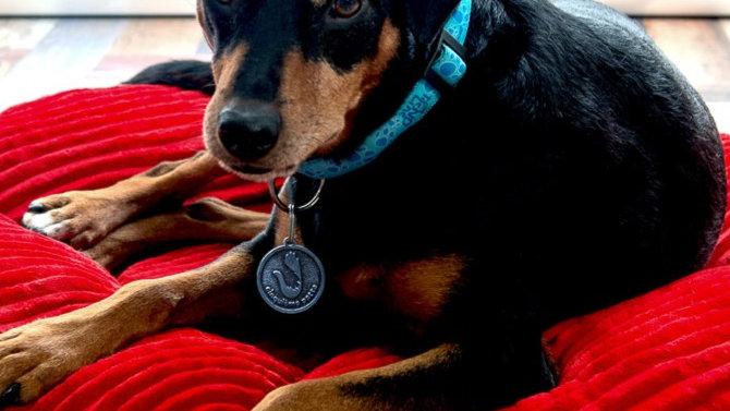 Dog Medal/ Keychain