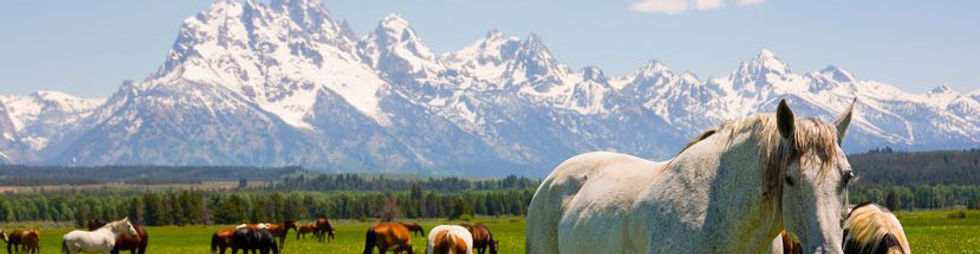 Behind a white horse is mountain scenery