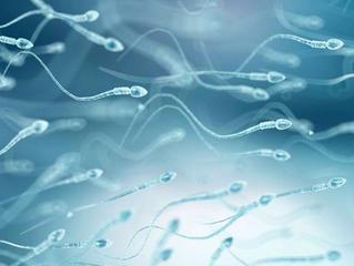 Contato com agrotóxicos pode causar alterações nos espermatozoides