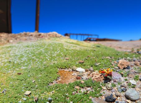 ウユニ塩湖環境問題ごみ問題セミナーについて