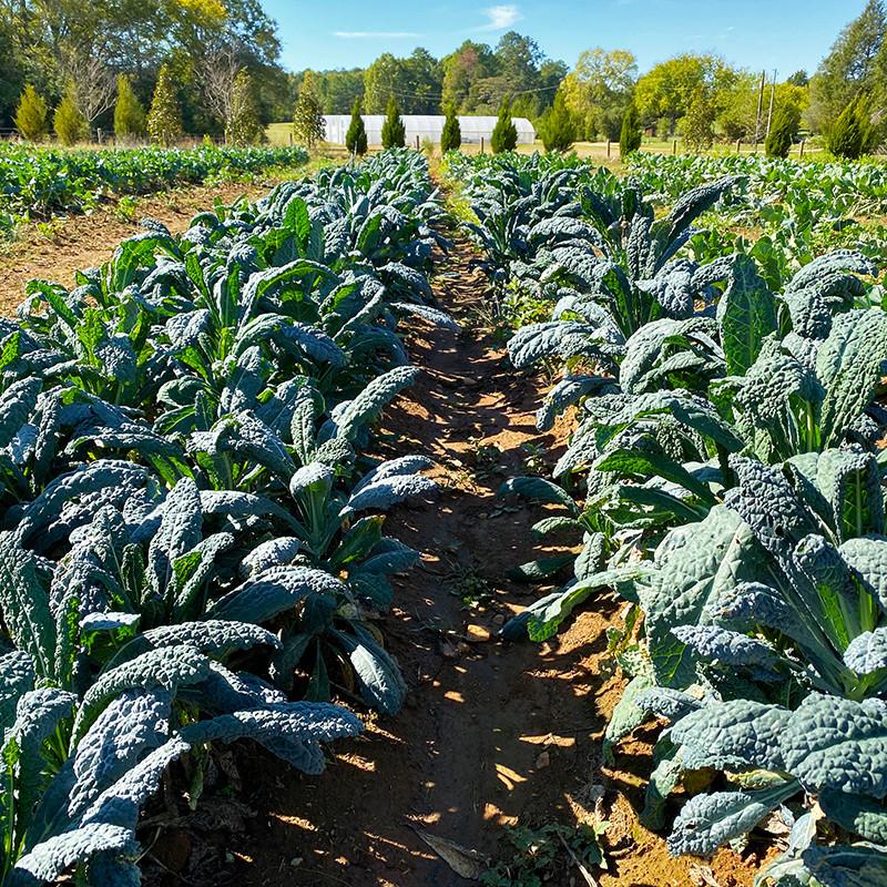 Wild Hope Farm, Chester, South Carolina