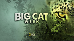 BigCat_Grunch_4