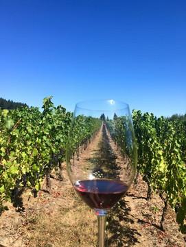 Oregon Wine Country 2