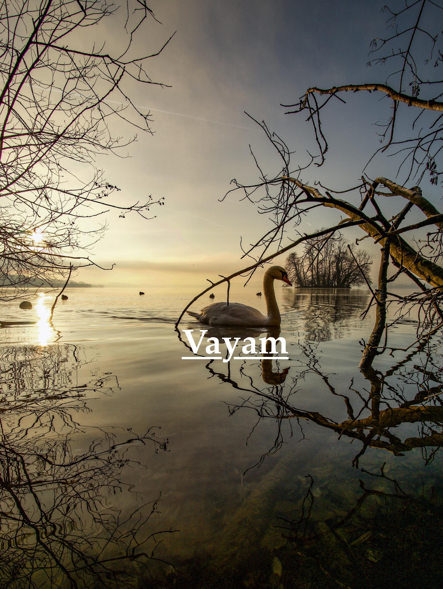 Shining Swan