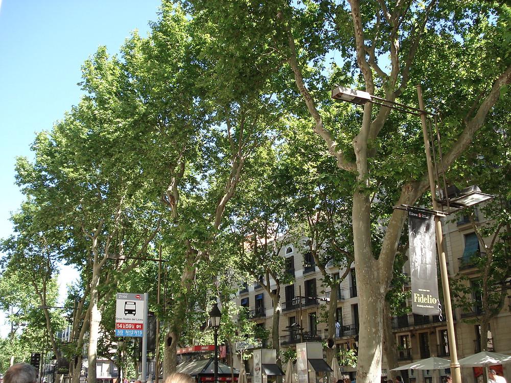 Milimari unterwegs  Barcelona musikalisch