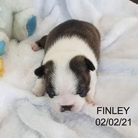 finley%202_edited.jpg