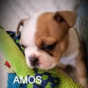 Amos_edited.jpg