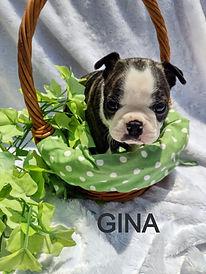 Gina 1_edited.jpg
