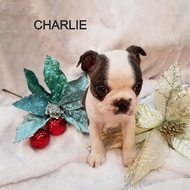 charlie%2011_edited.jpg