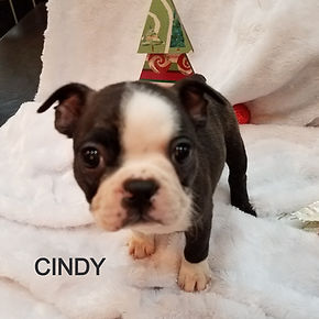 cindy%2011_edited.jpg