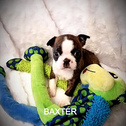 baxter%20c_edited.jpg