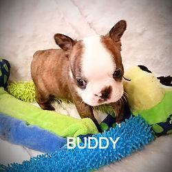 buddy%20b_edited.jpg