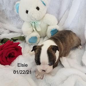 Elsie%202_edited.jpg