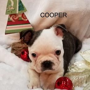 cooper11_edited.jpg