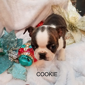 cookie%2011_edited.jpg