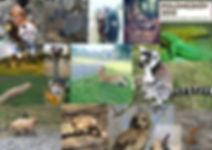 Polonezkoy Country Club Animals.jpg
