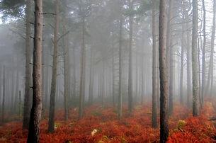 Optimized-Sallygap Trees in the Mist-2.j
