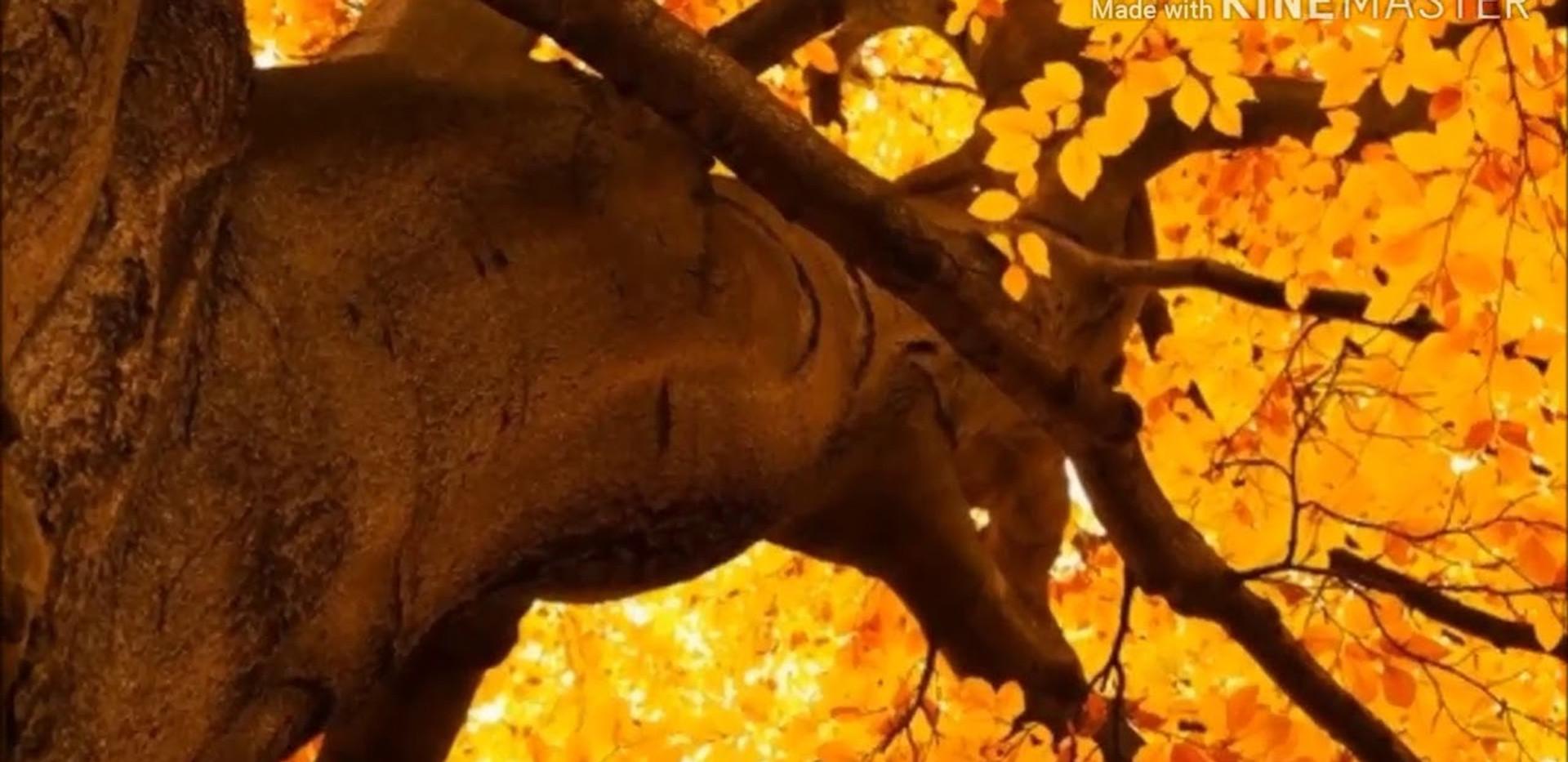 Ode all'autunno | di Francesca Maier