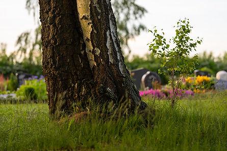 birkenwald.jpg