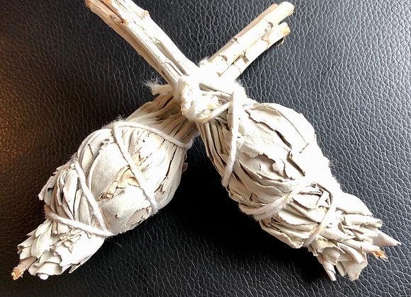 White sage bulbs