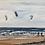 Thumbnail:  Brancaster Kite Surf - Print on Canvas