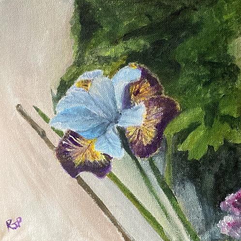 Iris Siberica Uncorked -Original  Acrylic on Canvas
