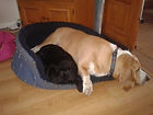 Max & Polly sharing beds
