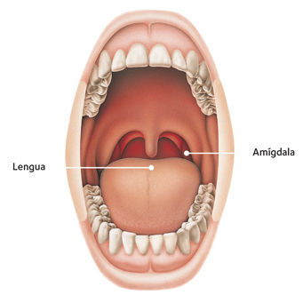 Throat Anatomy_Spanish_resized.jpg