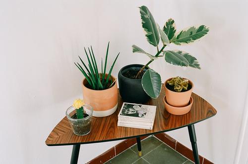 inspiration verdure composition florale inspi deco idee