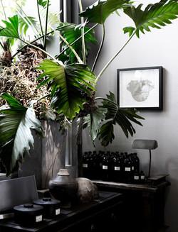 inspiration plante interieur verdure contemporaine idee deco inspi