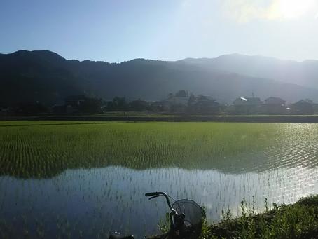 河和田の猛暑
