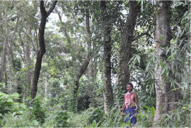 La forêt de Jadav Payeng ©Siddharta Kumar – dpa