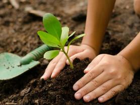 Inde: 50 millions d'arbres plantés en 24h pour les générations futures (#023)