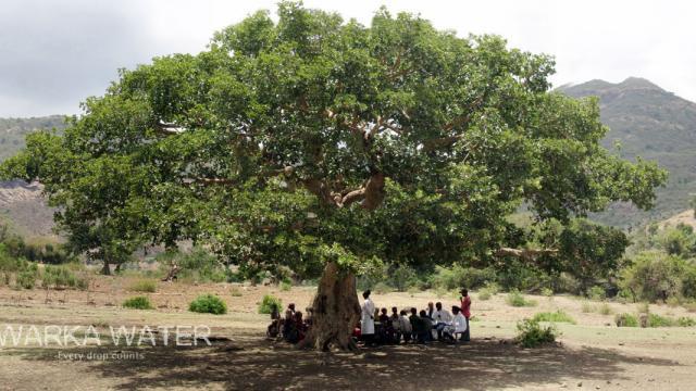 L'arbre Warka, qui a donné le nom à la tour. Photo : Warka Water.