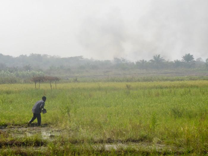 Rizière dans le canton de Kovié, au Togo. © Caroline Grellier