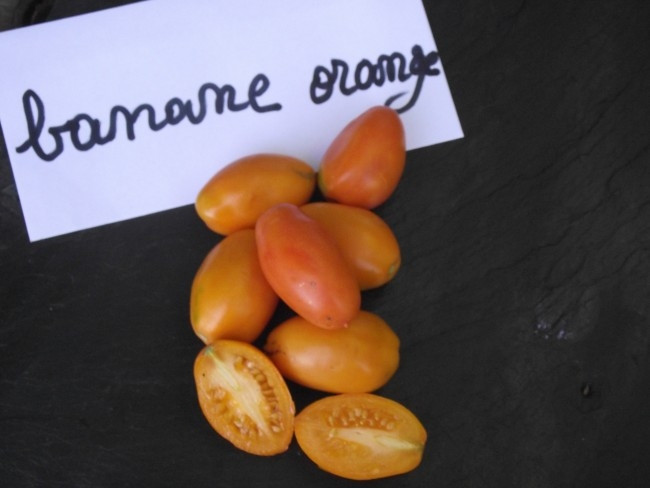 Les tomates de Pascal Poot, en 2014 - DR