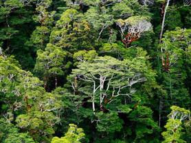La Nouvelle-Zélande va planter 100 millions d'arbres par an. (#022)