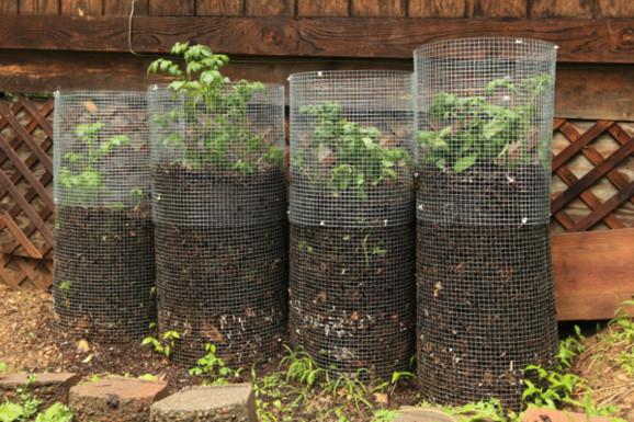 Des tours à pomme de terre (Crédit : Wormwool/Flickr CC)