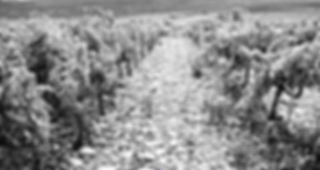 Vignes grises_edited.png