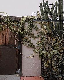 A western garden 🌵_._._._._._._.jpg