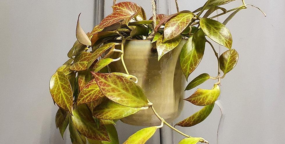 Hang bloempot groot 14 cm