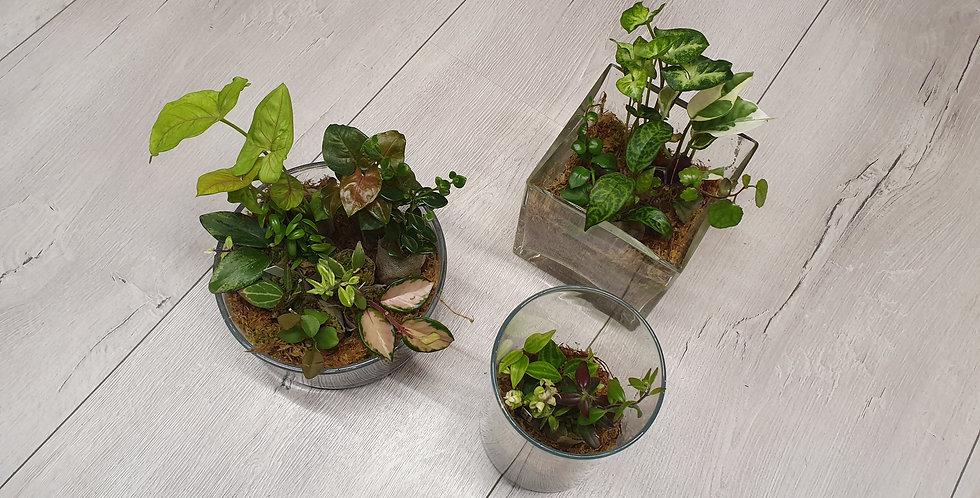 Suprisebox mini ecosysteem