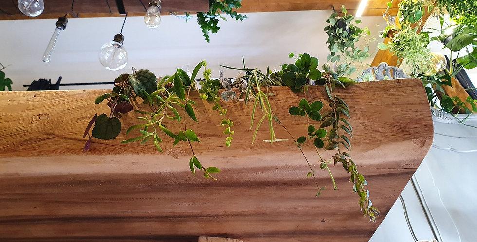 Suprisebox hangplanten