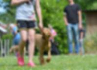 dog-school-662761_1920.jpg