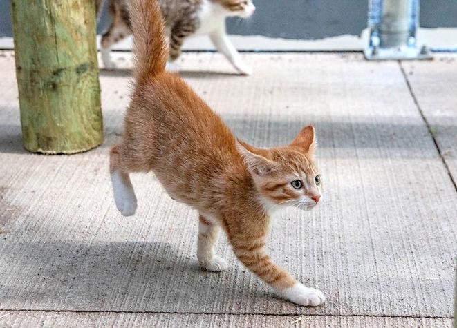 LJ-AAHS-kittens-20190730-2390_edited.jpg