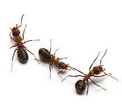ants_edited.jpg