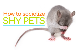 how to socialize shy pets