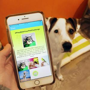 pet care app for kids