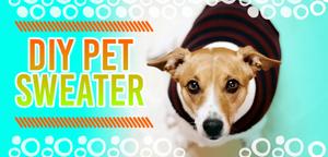 DIY Pet Sweater